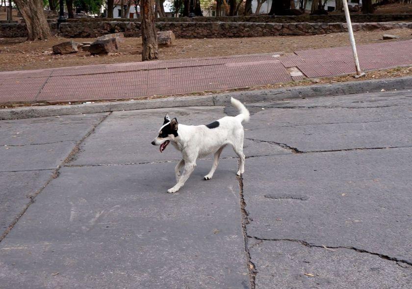 nosso cachorro em Salta